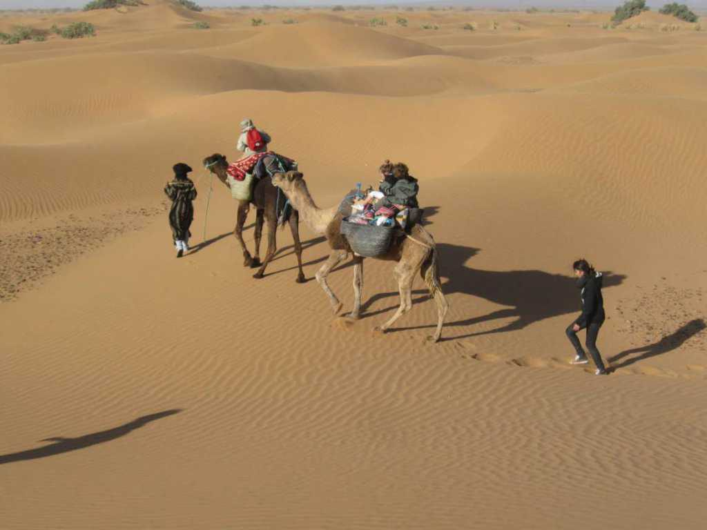 Desert Trek avec des chameaux