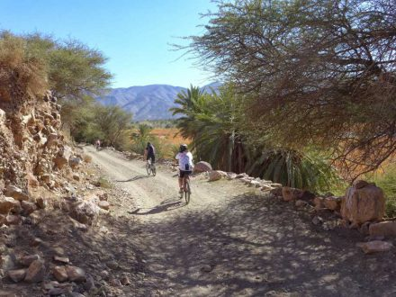 mountain biking in the valley of the draa with palm trees